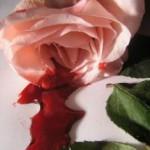 blutungen-rosen-10_2267079